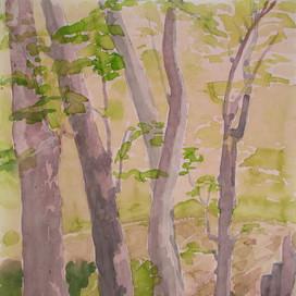 Wald bei Essen